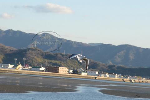 キラキラ–和歌浦〜干潟の夕日