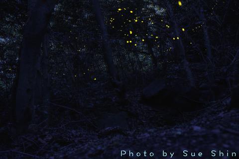 PHC-0390.jpg