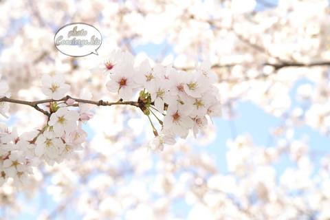 shin-2007-0126.jpg