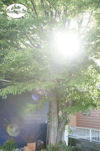 shin-2009-0210.jpg