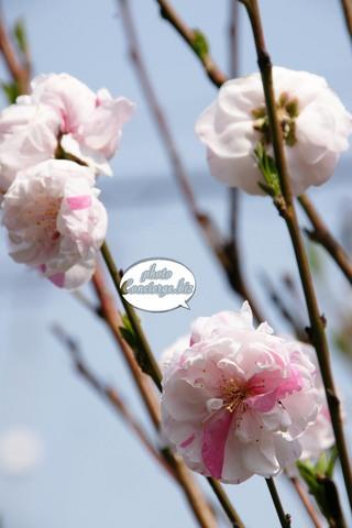 shin-2011-0340.JPG