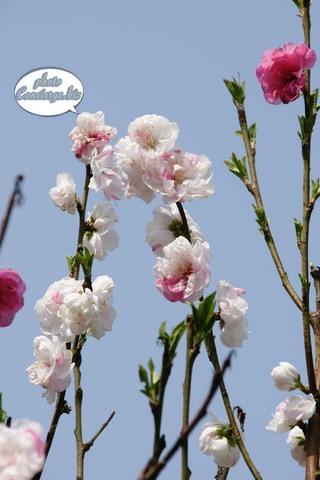 shin-2011-0341.JPG